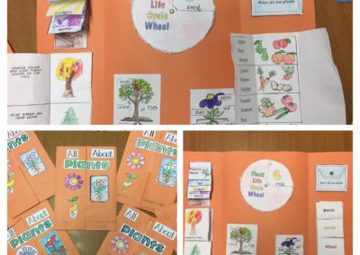 "Progetto CLIL: ""The Plants"" lapbook II E"